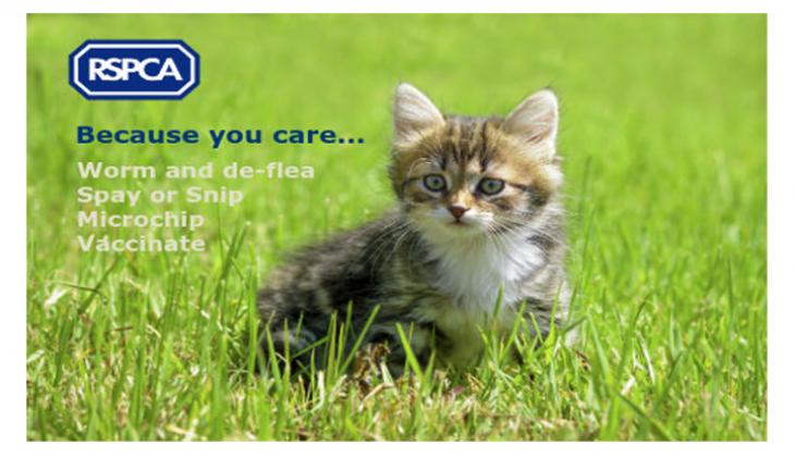 Urgent cat neutering appeal - Click or tap the picture for information