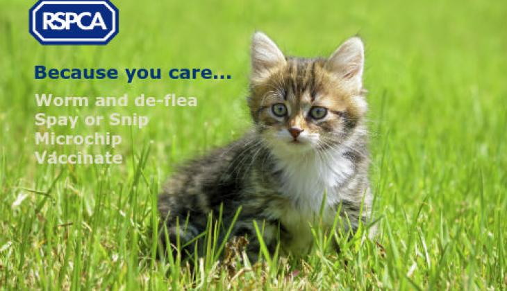 Please neuter your cat or dog