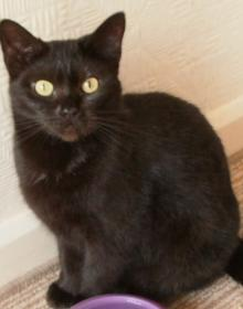 Cats and kittens for adoption in Keighley, Skipton - RSPCA Craven